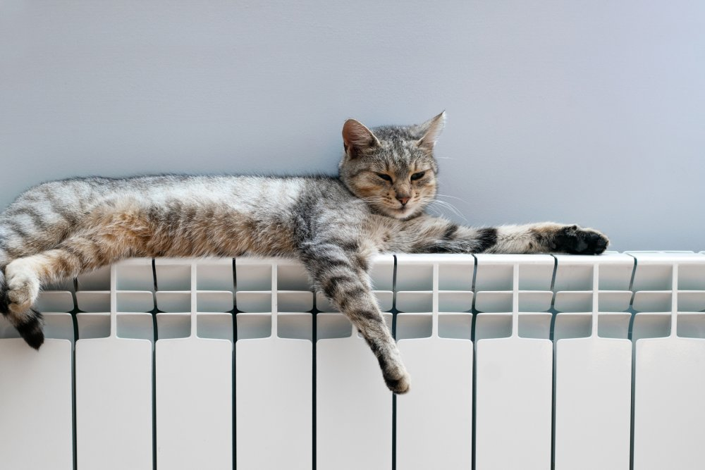Comment dissimuler un radiateur ? Chat_r10
