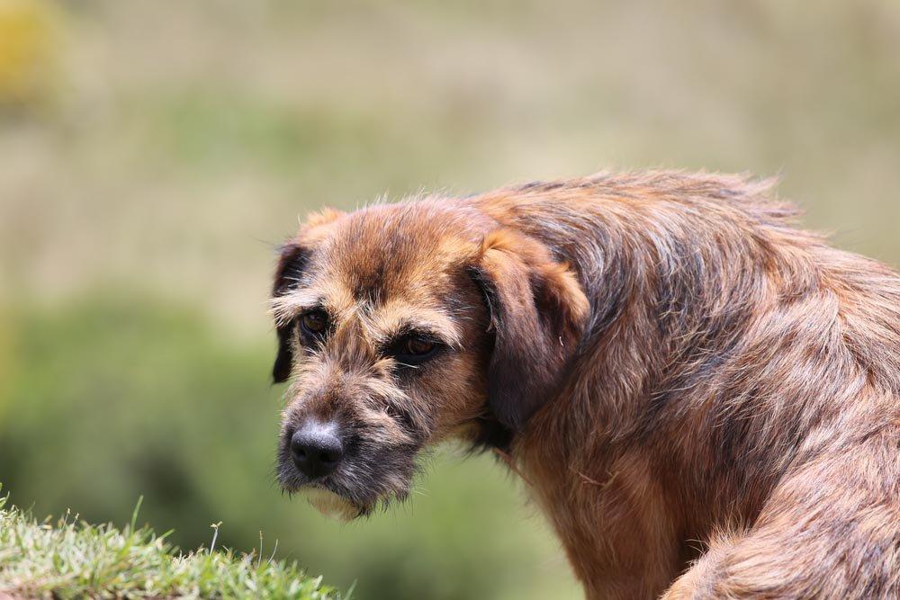 15 signes que votre chien est en colère contre vous Chien-10