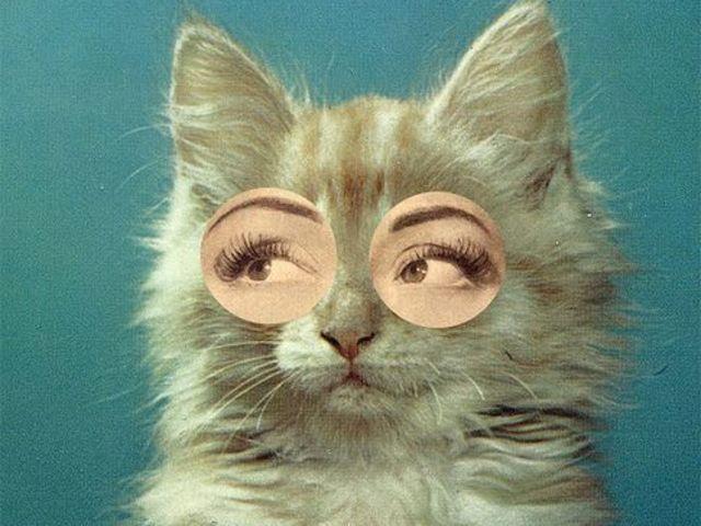 Test: Penses-tu comme un chien ou un chat? E4f21510
