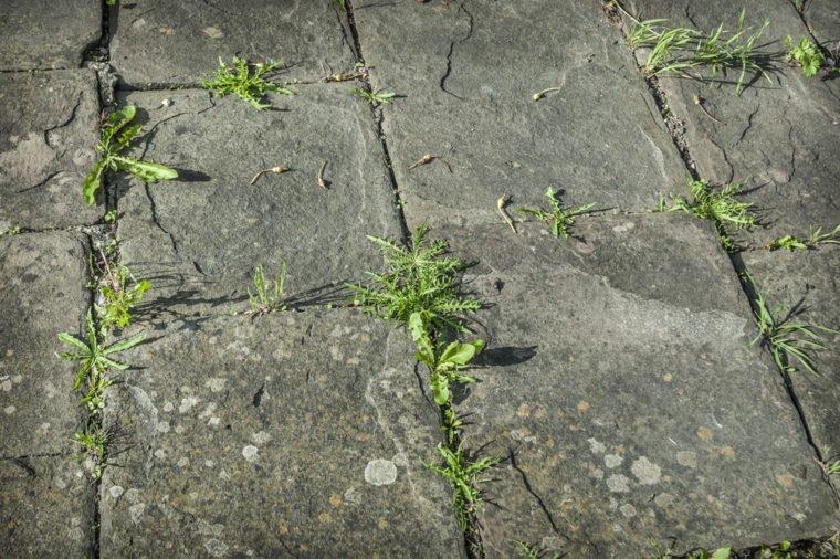 Éliminer les mauvaises herbes: nos 17 meilleurs trucs maison! Elimin11