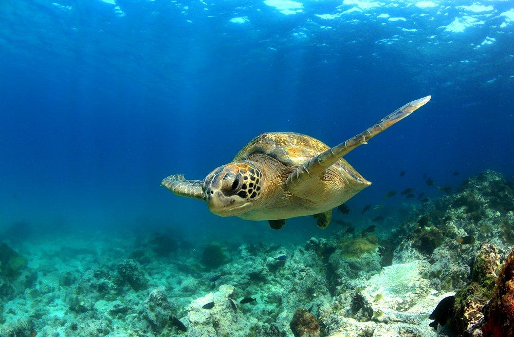 45 voyages de rêve pour fuir l'hiver Galapa10