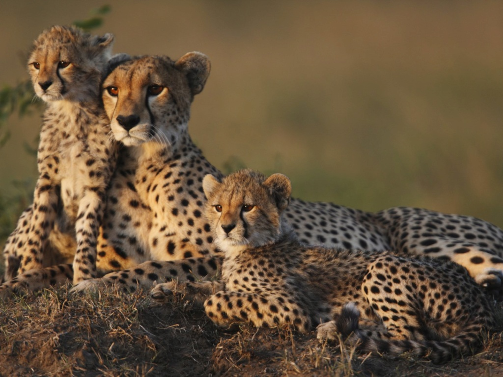 5 destinations pour observer le royaume animal Guepar10