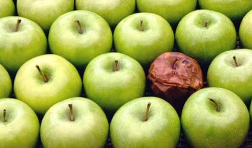 La théorie de la pomme pourrie : l'effet d'un mauvais collègue de travail Pomme-12
