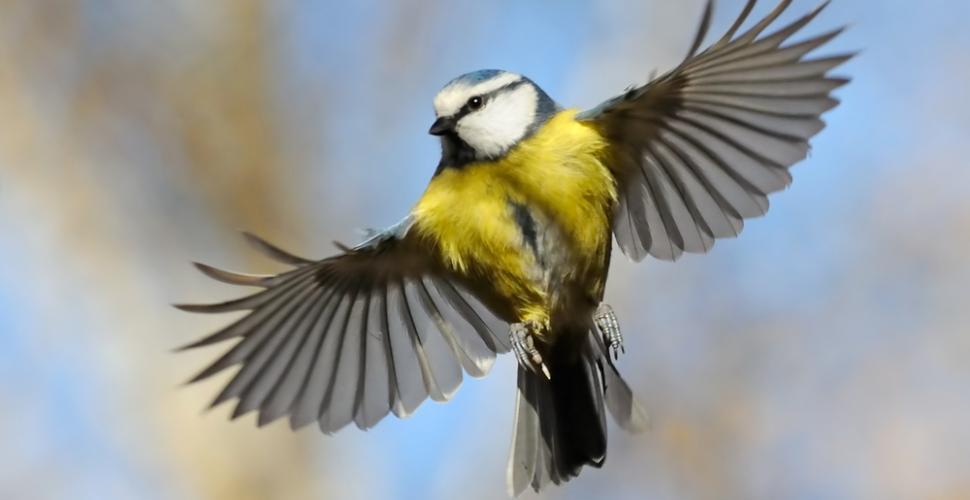 Comment attirer les oiseaux dans le jardin ? Shutte63