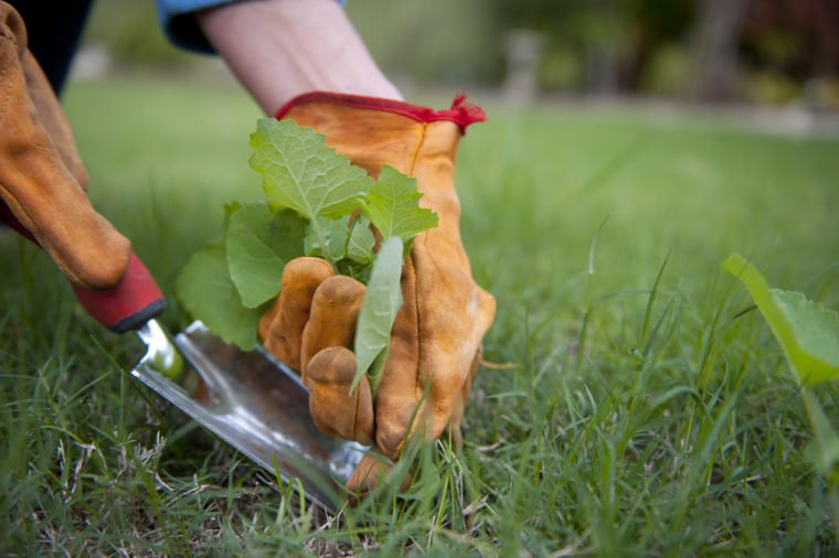 Éliminer les mauvaises herbes: nos 17 meilleurs trucs maison! Trucs-16