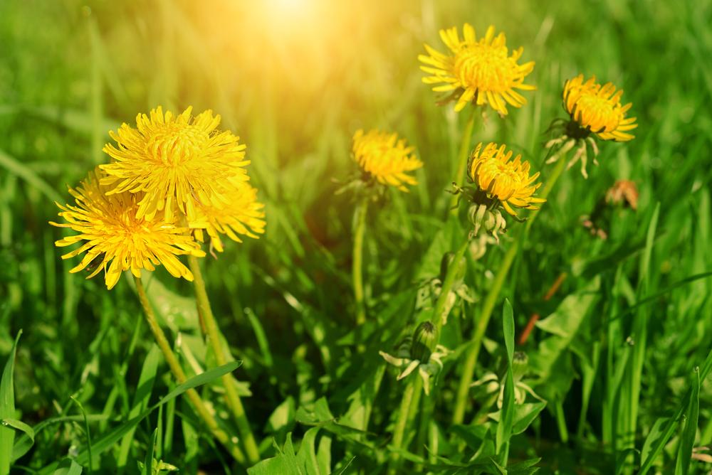 Éliminer les mauvaises herbes: nos 17 meilleurs trucs maison! Trucs-17