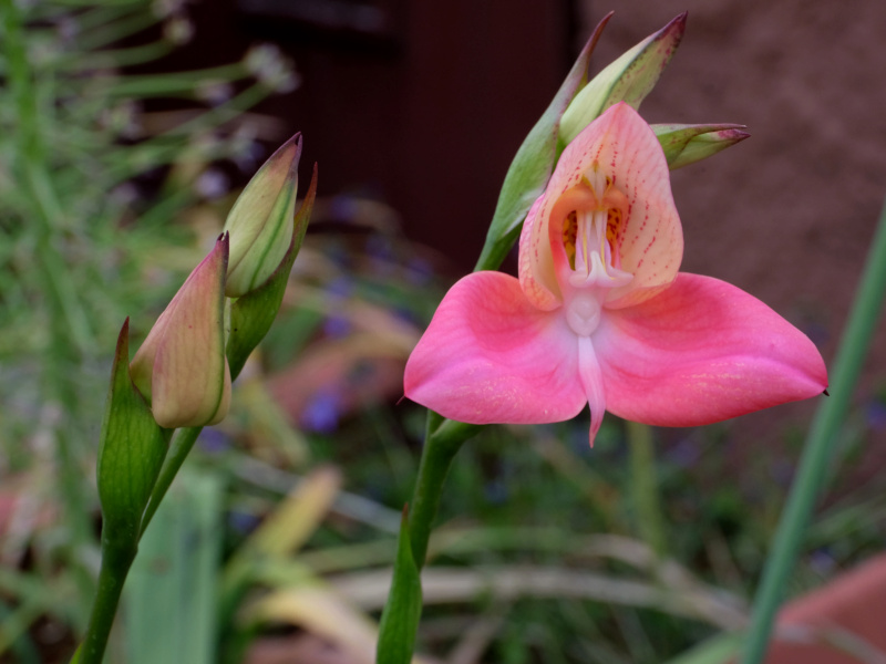 Orchideen-Neuzugang 2 - Seite 33 Dscf2613