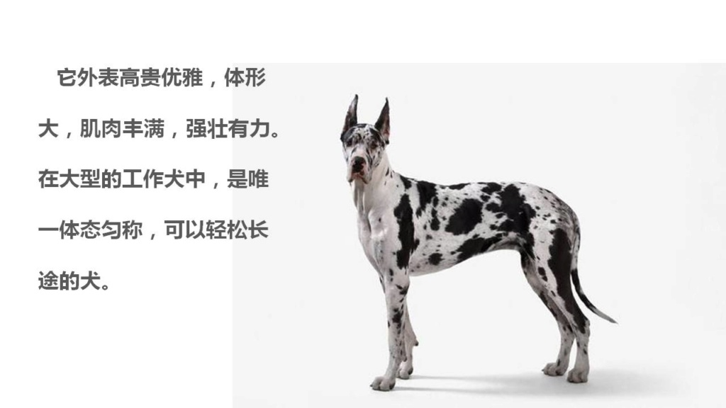 NEW PRODUCT: Mr.Z: simulation animal 37th-1/6 ratio German Great Dane German Great Dane - full set of 6 colors 10021810
