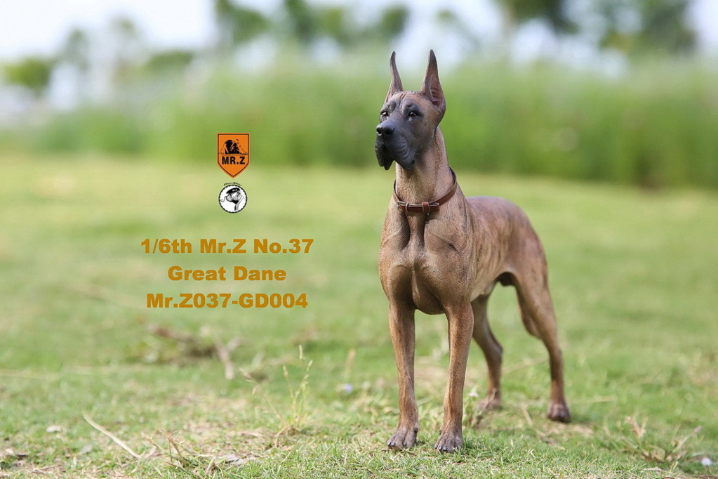 NEW PRODUCT: Mr.Z: simulation animal 37th-1/6 ratio German Great Dane German Great Dane - full set of 6 colors 10041610