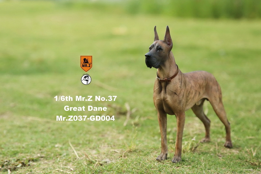 NEW PRODUCT: Mr.Z: simulation animal 37th-1/6 ratio German Great Dane German Great Dane - full set of 6 colors 10041710