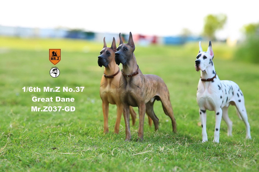 NEW PRODUCT: Mr.Z: simulation animal 37th-1/6 ratio German Great Dane German Great Dane - full set of 6 colors 10042010