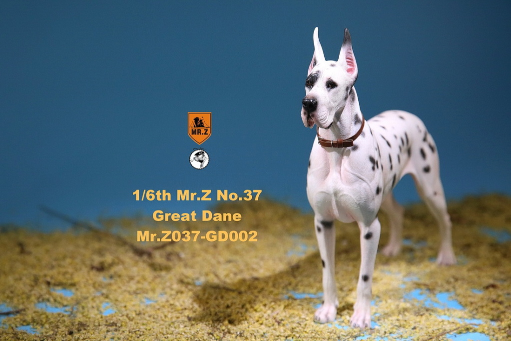 NEW PRODUCT: Mr.Z: simulation animal 37th-1/6 ratio German Great Dane German Great Dane - full set of 6 colors 10083510