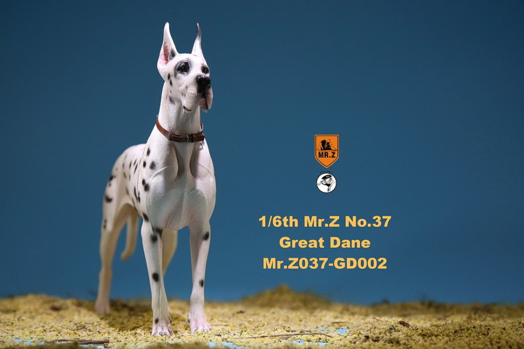 NEW PRODUCT: Mr.Z: simulation animal 37th-1/6 ratio German Great Dane German Great Dane - full set of 6 colors 10084010