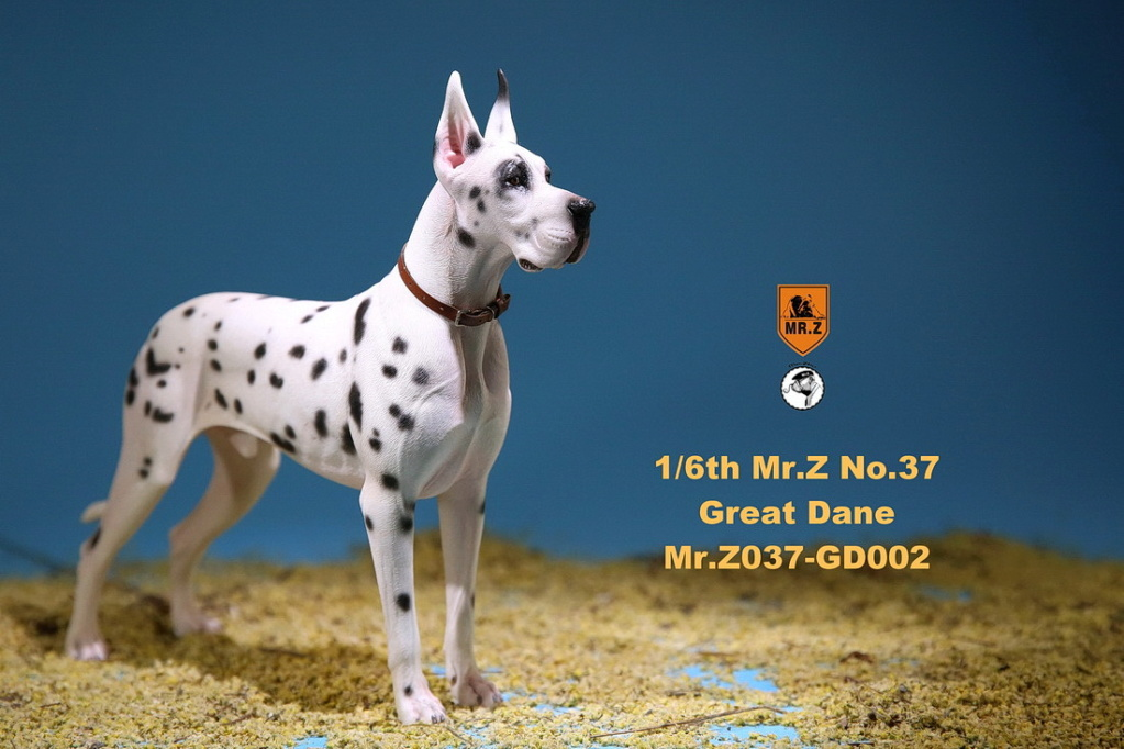 NEW PRODUCT: Mr.Z: simulation animal 37th-1/6 ratio German Great Dane German Great Dane - full set of 6 colors 10084110
