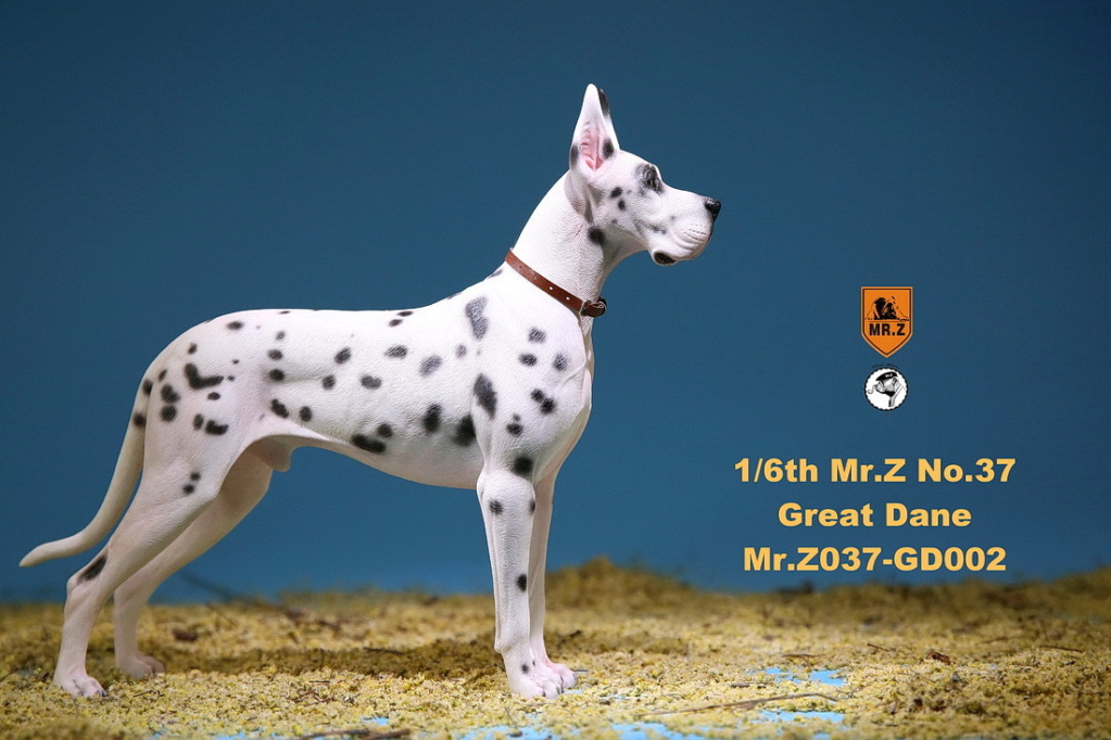 NEW PRODUCT: Mr.Z: simulation animal 37th-1/6 ratio German Great Dane German Great Dane - full set of 6 colors 10084111