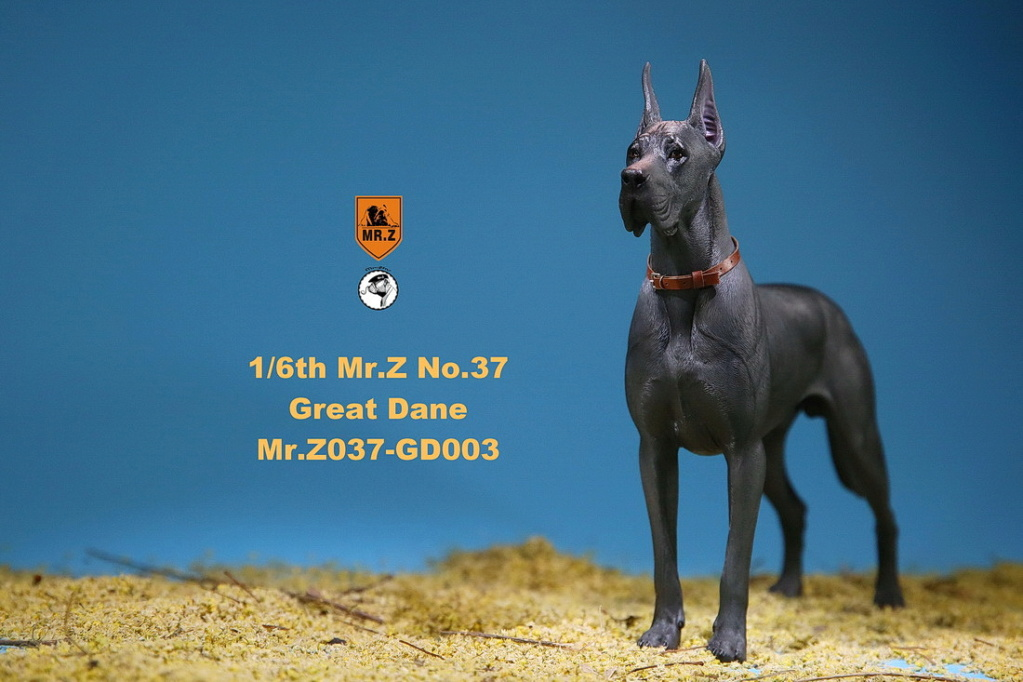 NEW PRODUCT: Mr.Z: simulation animal 37th-1/6 ratio German Great Dane German Great Dane - full set of 6 colors 10091410