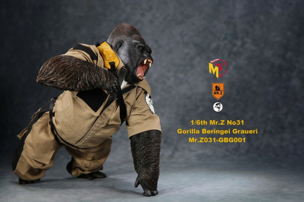 NEW PRODUCT: Mr.Z new product: 1/6 simulation animal model 31st bomb - African lowland gorilla (all 2 heads can be changed to upper limbs) 10102211