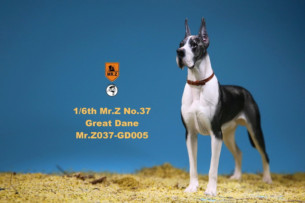 NEW PRODUCT: Mr.Z: simulation animal 37th-1/6 ratio German Great Dane German Great Dane - full set of 6 colors 10102611