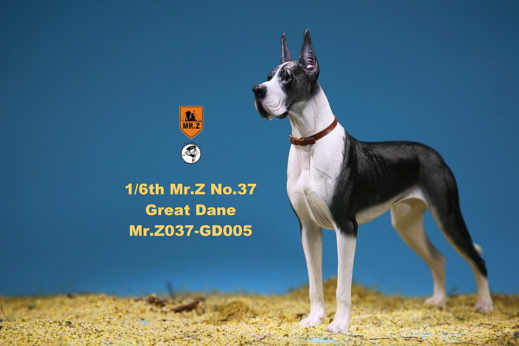 NEW PRODUCT: Mr.Z: simulation animal 37th-1/6 ratio German Great Dane German Great Dane - full set of 6 colors 10102612
