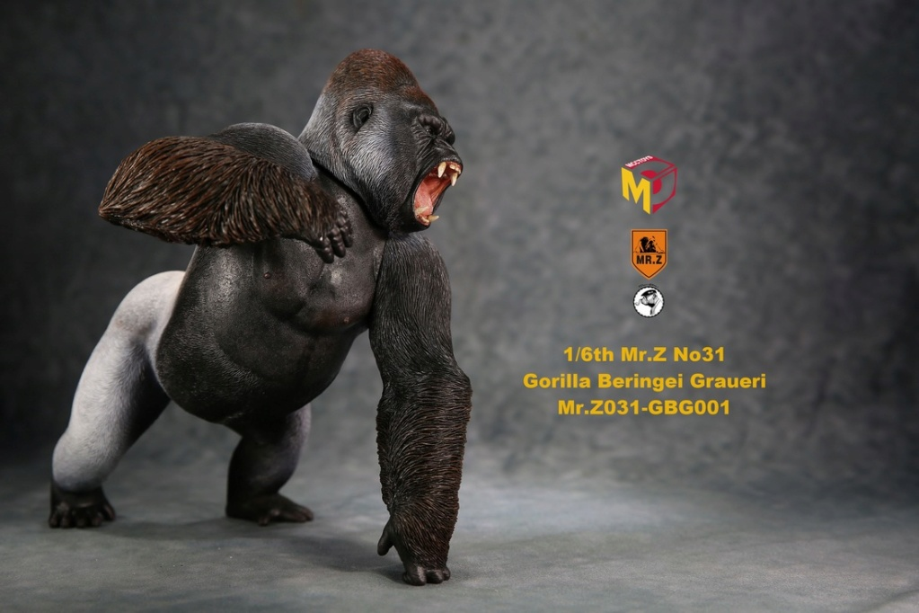 NEW PRODUCT: Mr.Z new product: 1/6 simulation animal model 31st bomb - African lowland gorilla (all 2 heads can be changed to upper limbs) 10102811