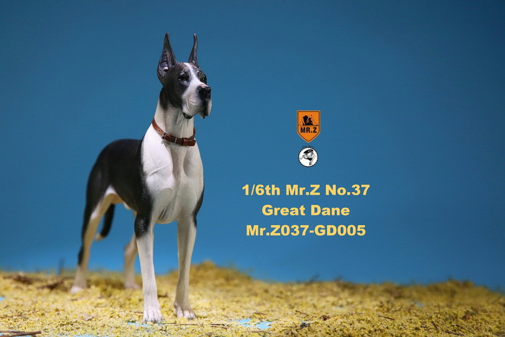 NEW PRODUCT: Mr.Z: simulation animal 37th-1/6 ratio German Great Dane German Great Dane - full set of 6 colors 10102812