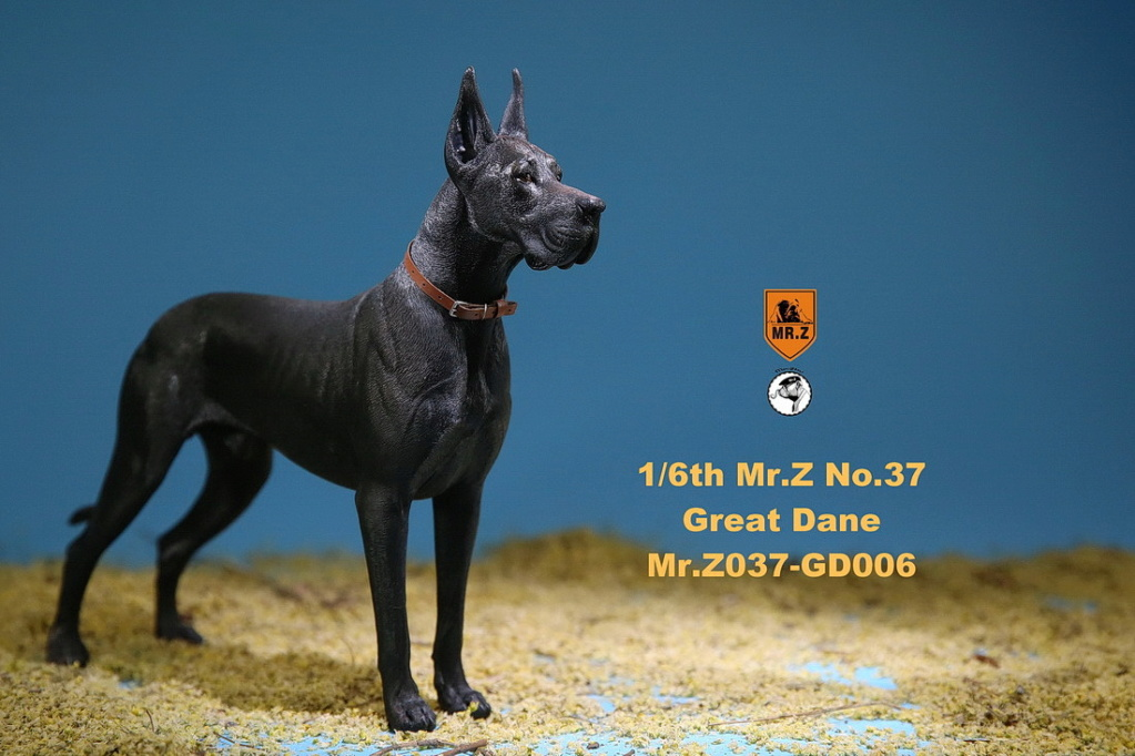 NEW PRODUCT: Mr.Z: simulation animal 37th-1/6 ratio German Great Dane German Great Dane - full set of 6 colors 10110411