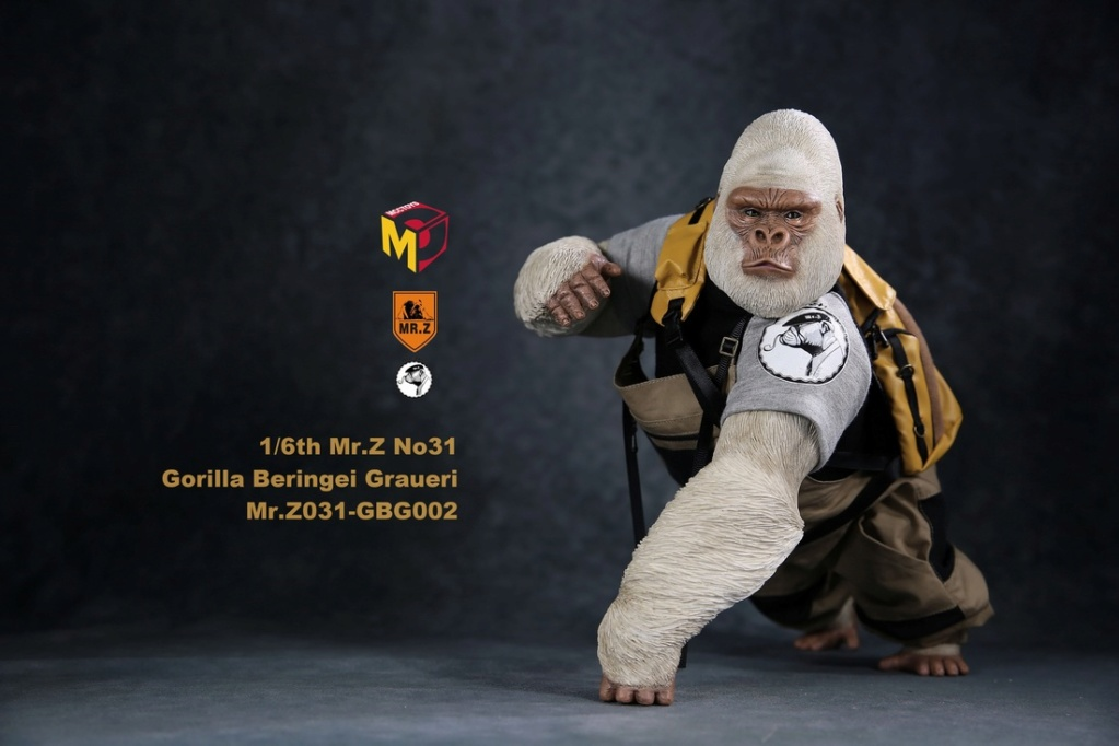 NEW PRODUCT: Mr.Z new product: 1/6 simulation animal model 31st bomb - African lowland gorilla (all 2 heads can be changed to upper limbs) 10110810