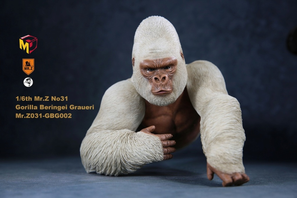 NEW PRODUCT: Mr.Z new product: 1/6 simulation animal model 31st bomb - African lowland gorilla (all 2 heads can be changed to upper limbs) 10110911