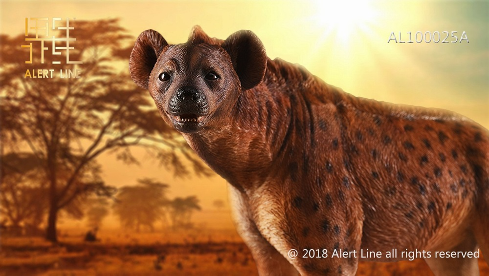 Dog - NEW PRODUCT: Alert Line line play model: 1/6 (Hyena) class dog / Crocuta Crocuta-2 color (AL100025A & B) 19235110