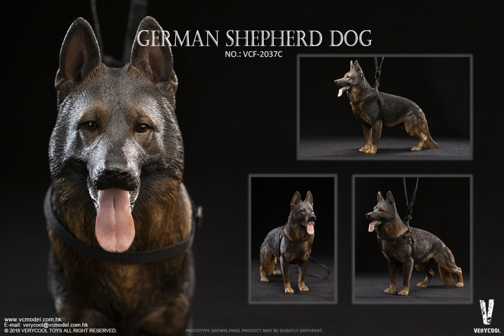 Dog - NEW PRODUCT: VERYCOOL new product: 1/6 ruin camouflage double female soldier - Jenna JENNER movable doll - A section & B section + German shepherd 23240010