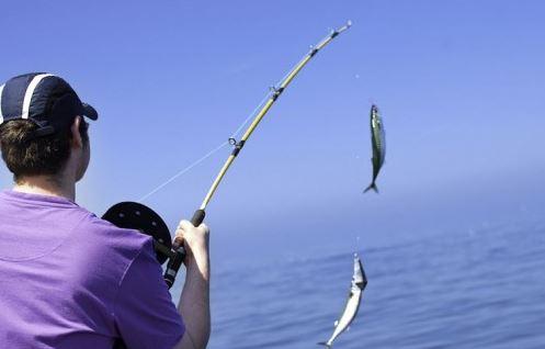 منتدى معدات صيد و طرق و تصنيف الاسماك
