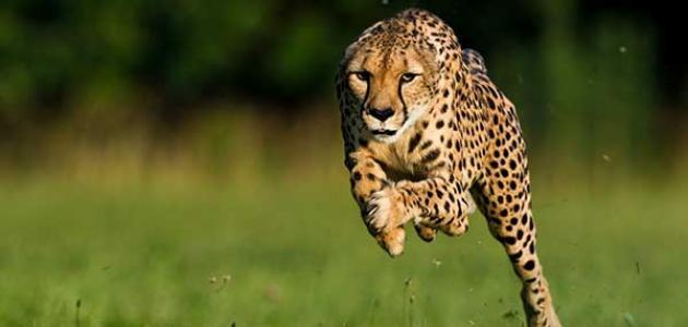 منتدى عالم الحيوانات البرية