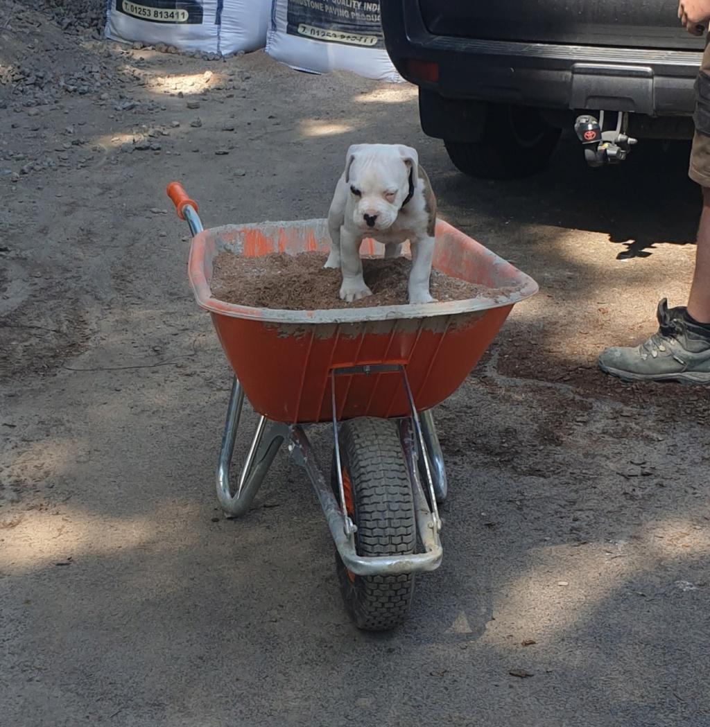 New puppy Dexter 20190512