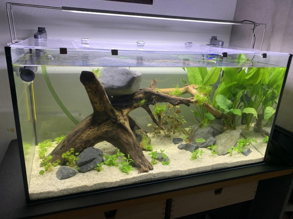 Plantes pour débutant ? Sol nutritif ? Aquafi11