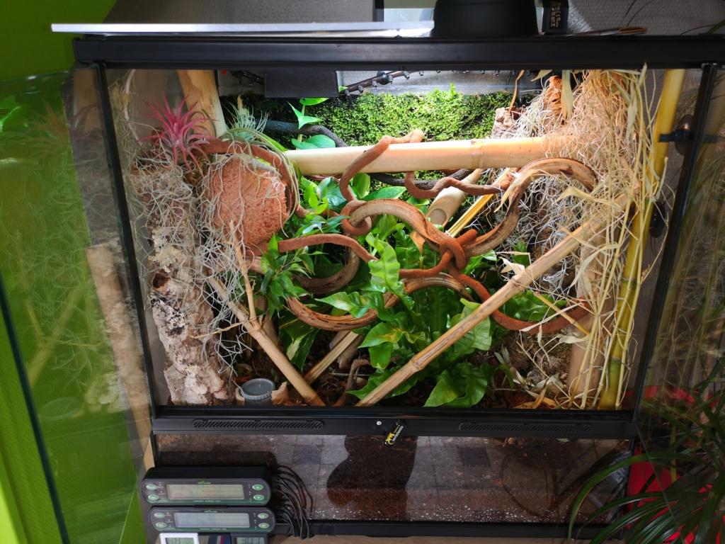 Question terrarium pour phelsuma laticauda Img_2010