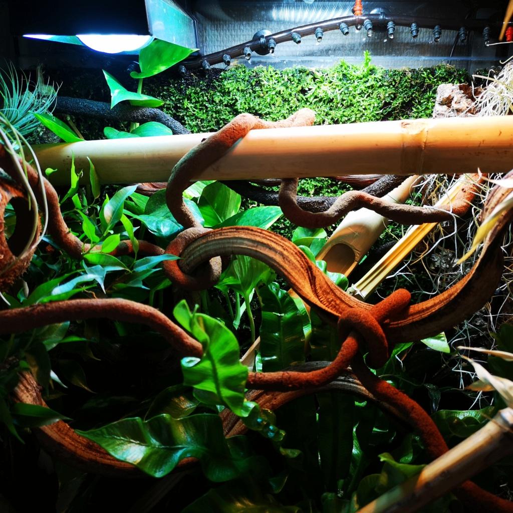 Question terrarium pour phelsuma laticauda Img_2011