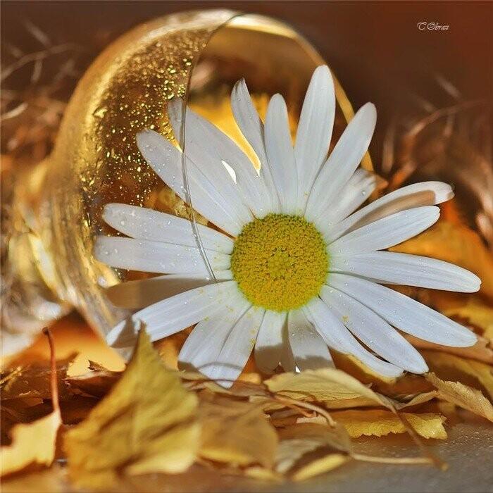 Осенний ноктюрн )( стих Image-11
