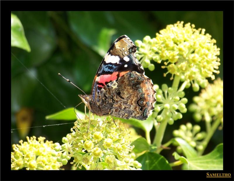 Les papillons sauvages du zoo d'Amiens 00910