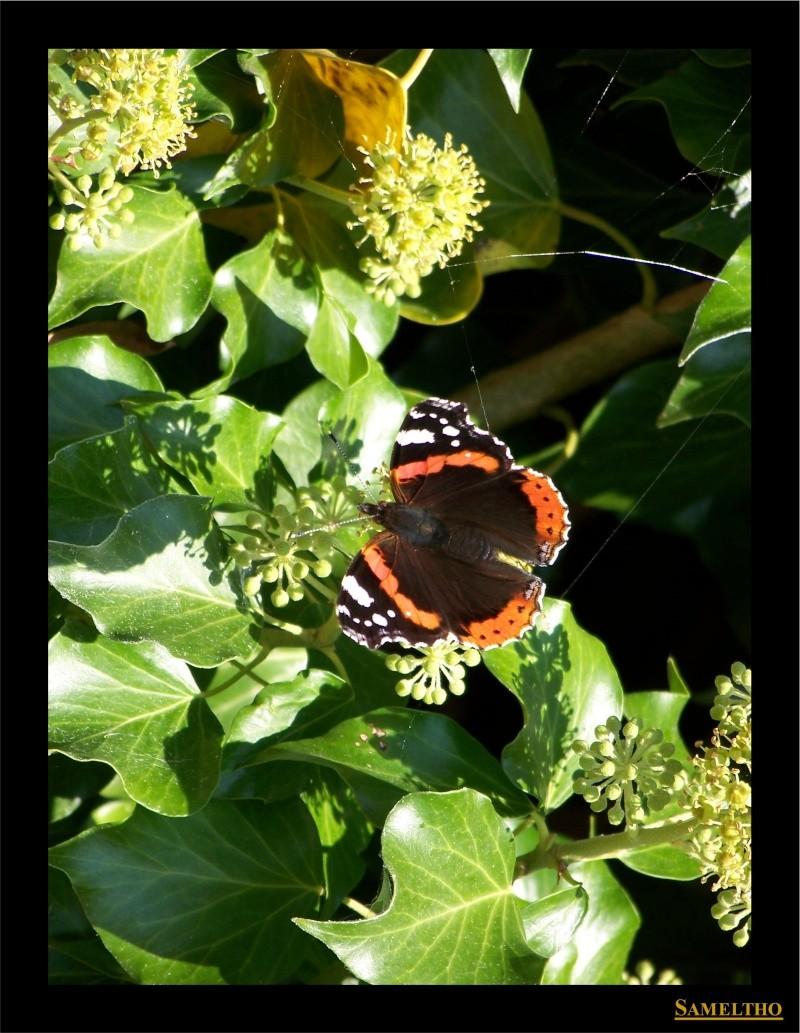Les papillons sauvages du zoo d'Amiens 02410