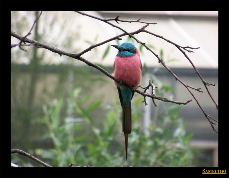 Le zoo de Rotterdam 100_5310