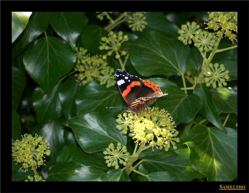 Les papillons sauvages du zoo d'Amiens 19710