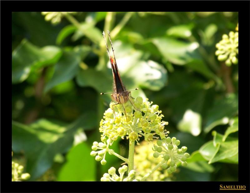 Les papillons sauvages du zoo d'Amiens 20110