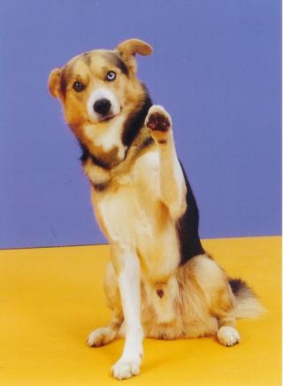 quand les gens confonde vos chiens avec une autre race!!! - Page 6 41279_10