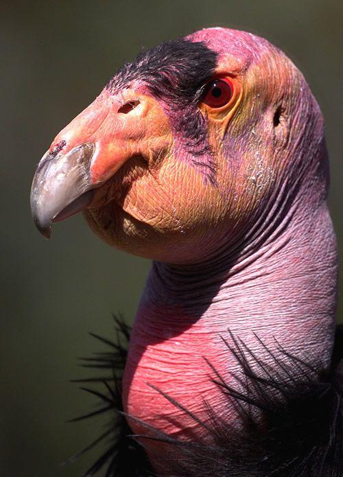 z'oiseaux rares Droise10