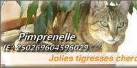 BARNABE, mâle, né le 01/2012    , tabby brown, IE n° 250269802232490 Adap110