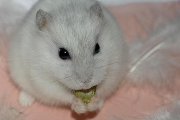 [Hamster Russe] Plug-in Plug-i10