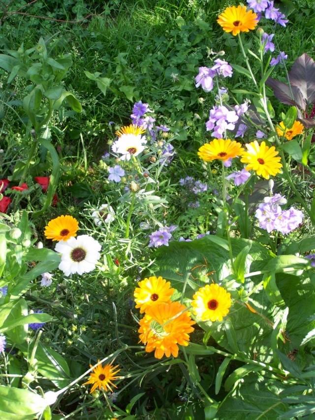 Quelques fleurs du jardin Fleurs11