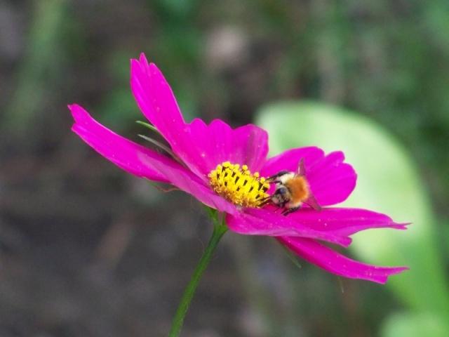 Quelques fleurs du jardin Fleurs12