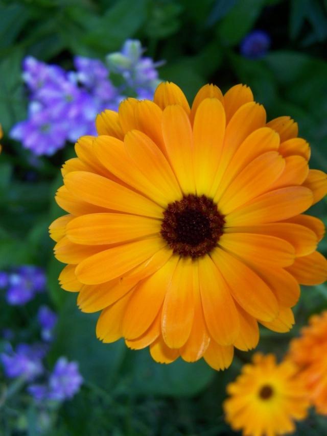 Quelques fleurs du jardin Fleurs19
