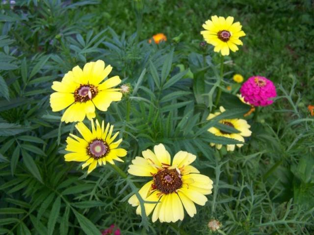 Quelques fleurs du jardin Fleurs20